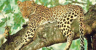 Kenya Safari or South Africa Game Reserve can be included within your Kenya Twin Centre Holidays